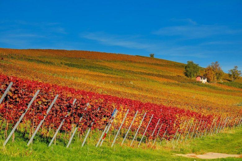 Weekend di relax nelle campagne emiliane | Agriturismo La Brezza