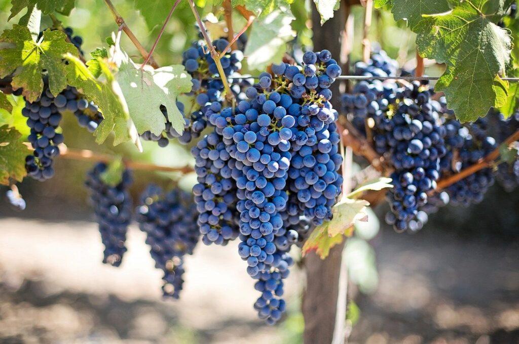 I vitigni e i vini dell'Emilia-Romagna | Agriturismo La Brezza
